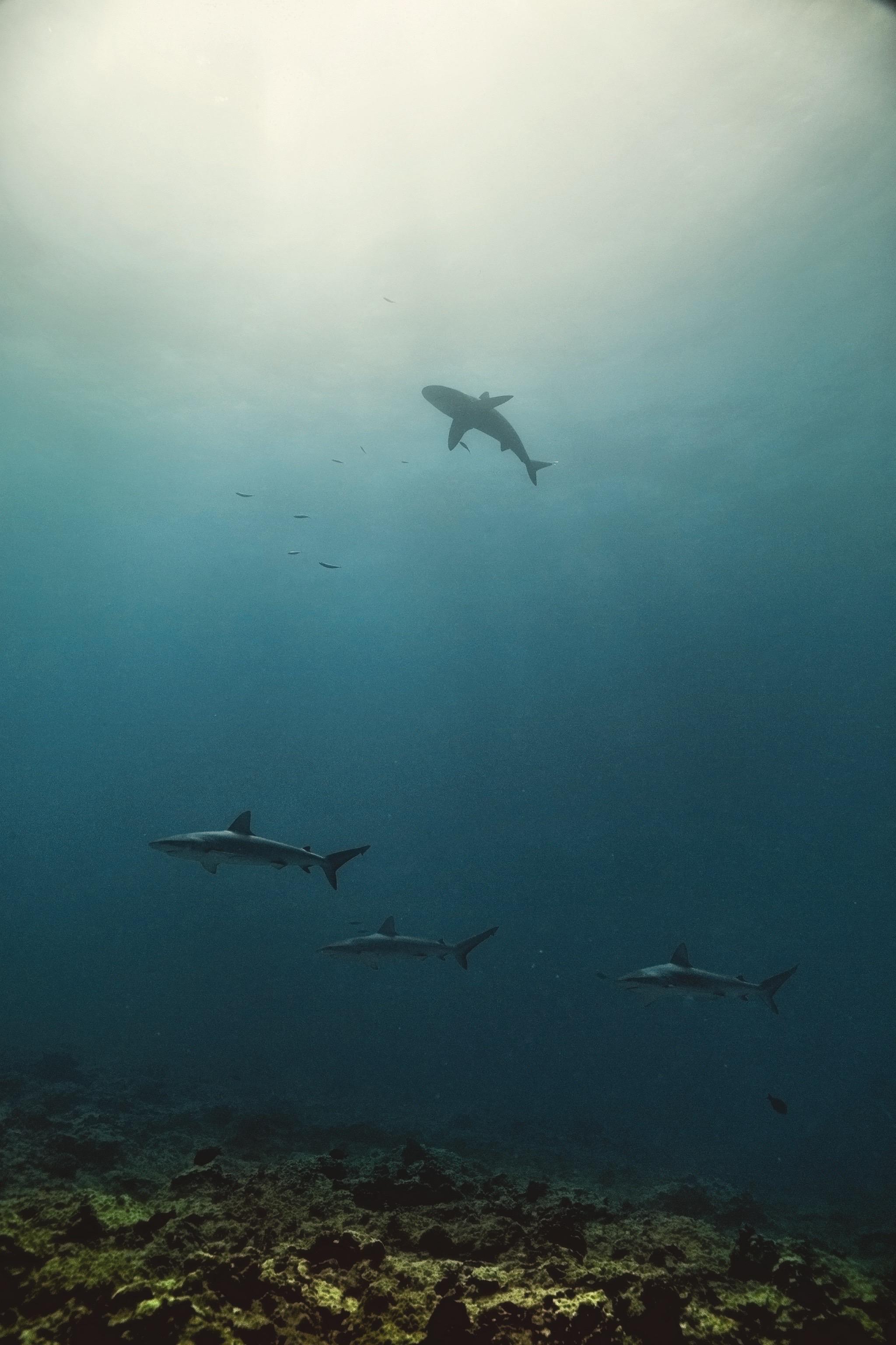 The Far Atolls
